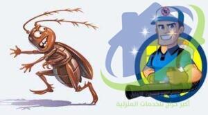 شركة مكافحة حشرات المنازل بالدمام